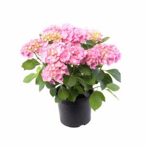 Plantas de exterior grupo hijuelas for Vivero hijuelas