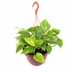 Plantas de interior grupo hijuelas for Vivero hijuelas
