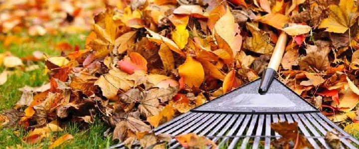Cuidado para tu jardín en otoño