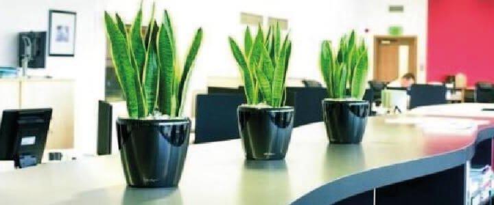 ¿POR QUÉ TENER PLANTAS EN TU OFICINA? – PARTE 2