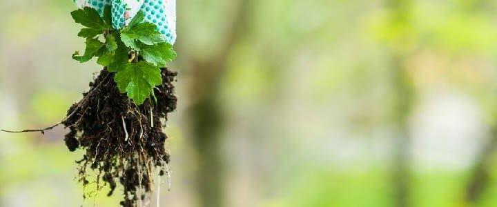 Cómo eliminar las malas hierbas del jardín